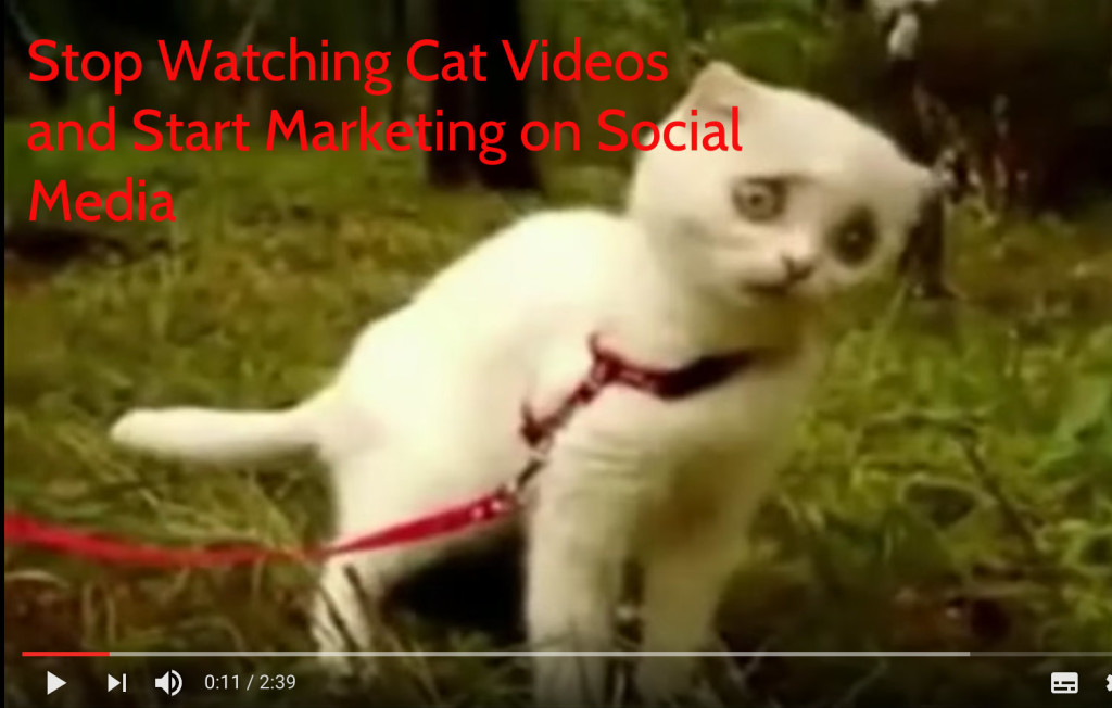 Stop Watching Cat Videos And Start Marketing On Social Media